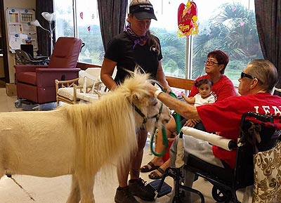 Equine Outreach Program Hawaii